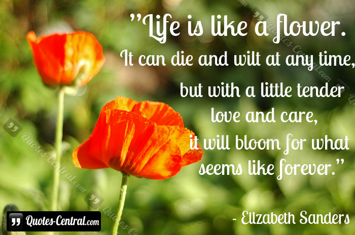 Quotes About Life And Flowers Quotesgram