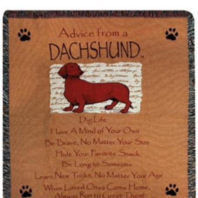 Dachshund Quotes Sayings Quotesgram