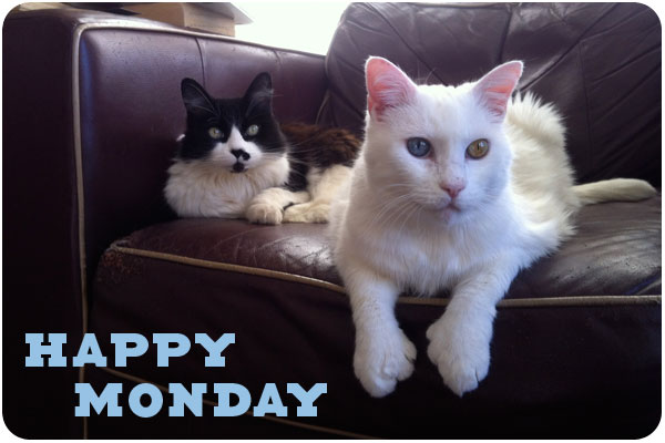 Happy Monday Animal Quotes. QuotesGram