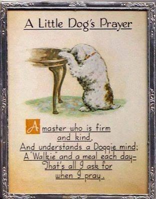 Dog Praying Before Bed