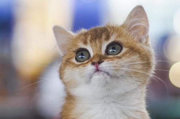 best cat litter for baby kittens