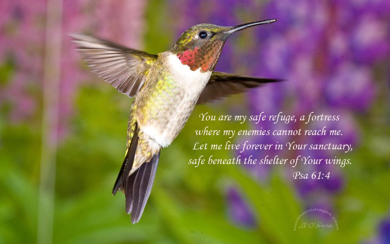 hummingbirds quotes quotesgram