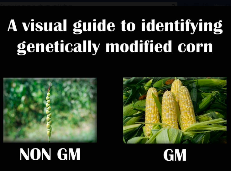 are gmo products really that harmful