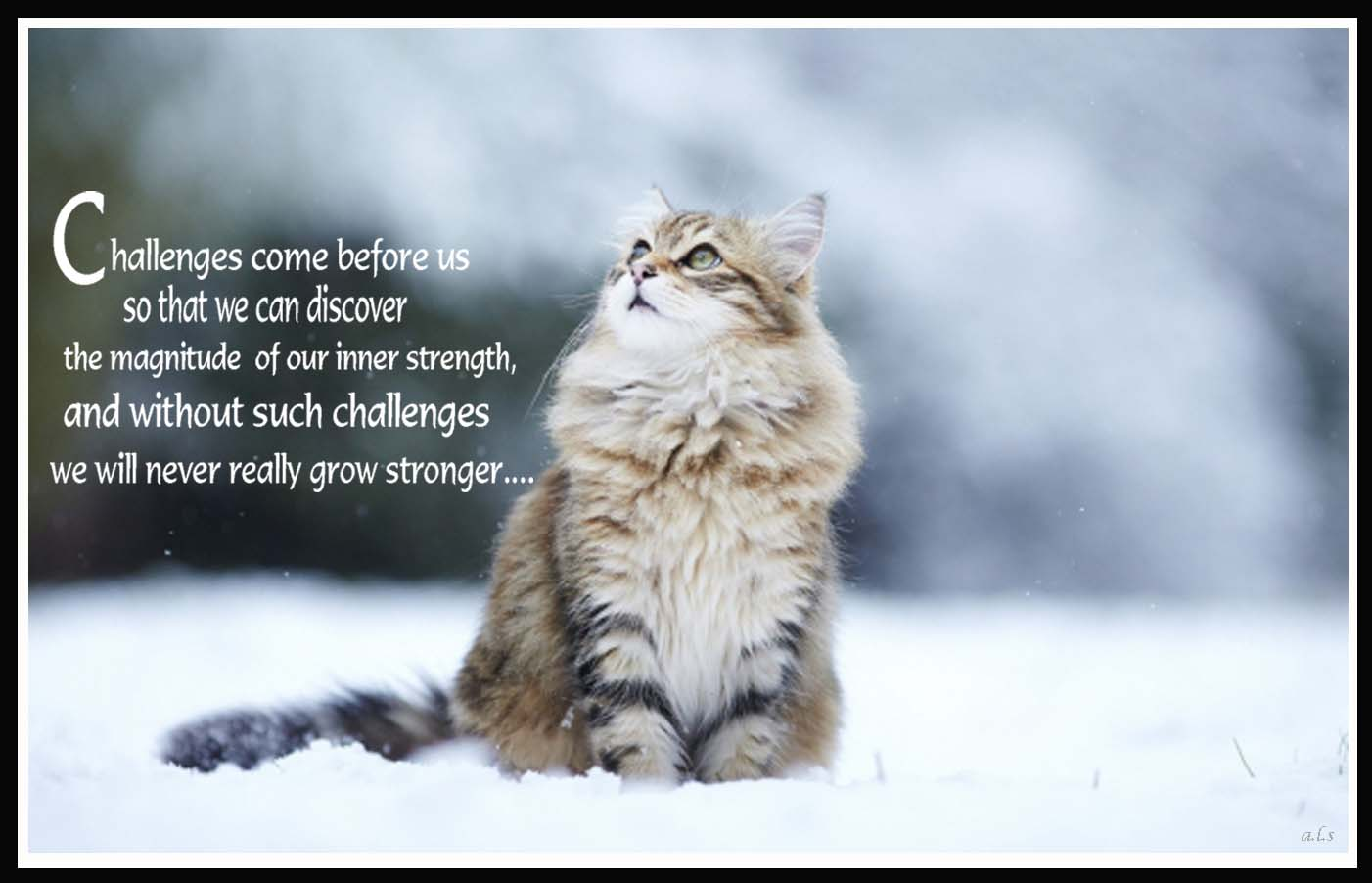 Cold Weather Quotes Quotesgram