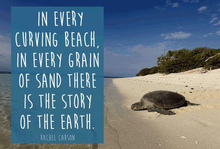 Rachel Carson Quotes Quotations. QuotesGram