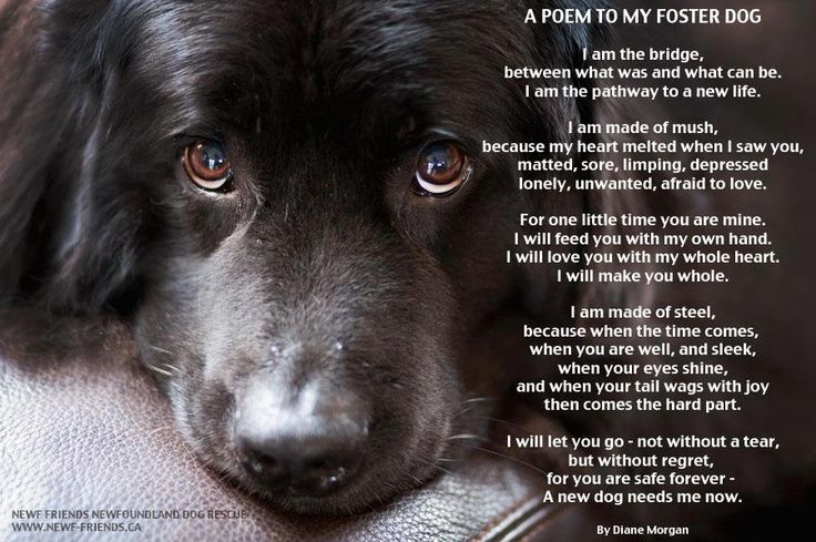 You Adopted The Darkness Quote: Foster Dog Quotes. QuotesGram