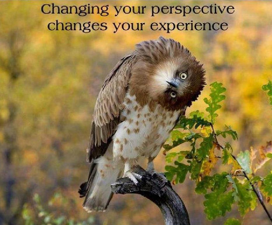 Quotes Change Your Perspective. QuotesGram