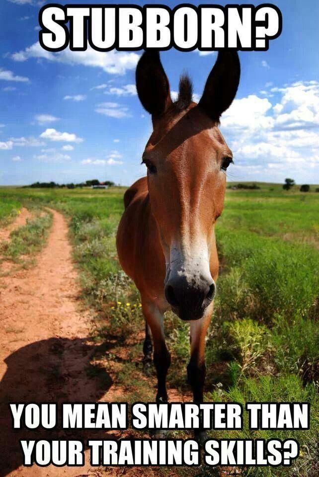 Funny donkey quotes hindi - photo#37