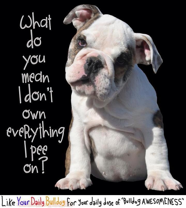 Cute Quotes In French: Bulldog Quotes Cute. QuotesGram