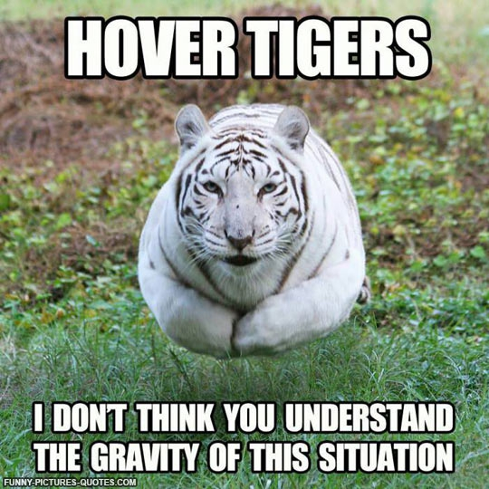 funny tiger pictures with quotes quotesgram. Black Bedroom Furniture Sets. Home Design Ideas