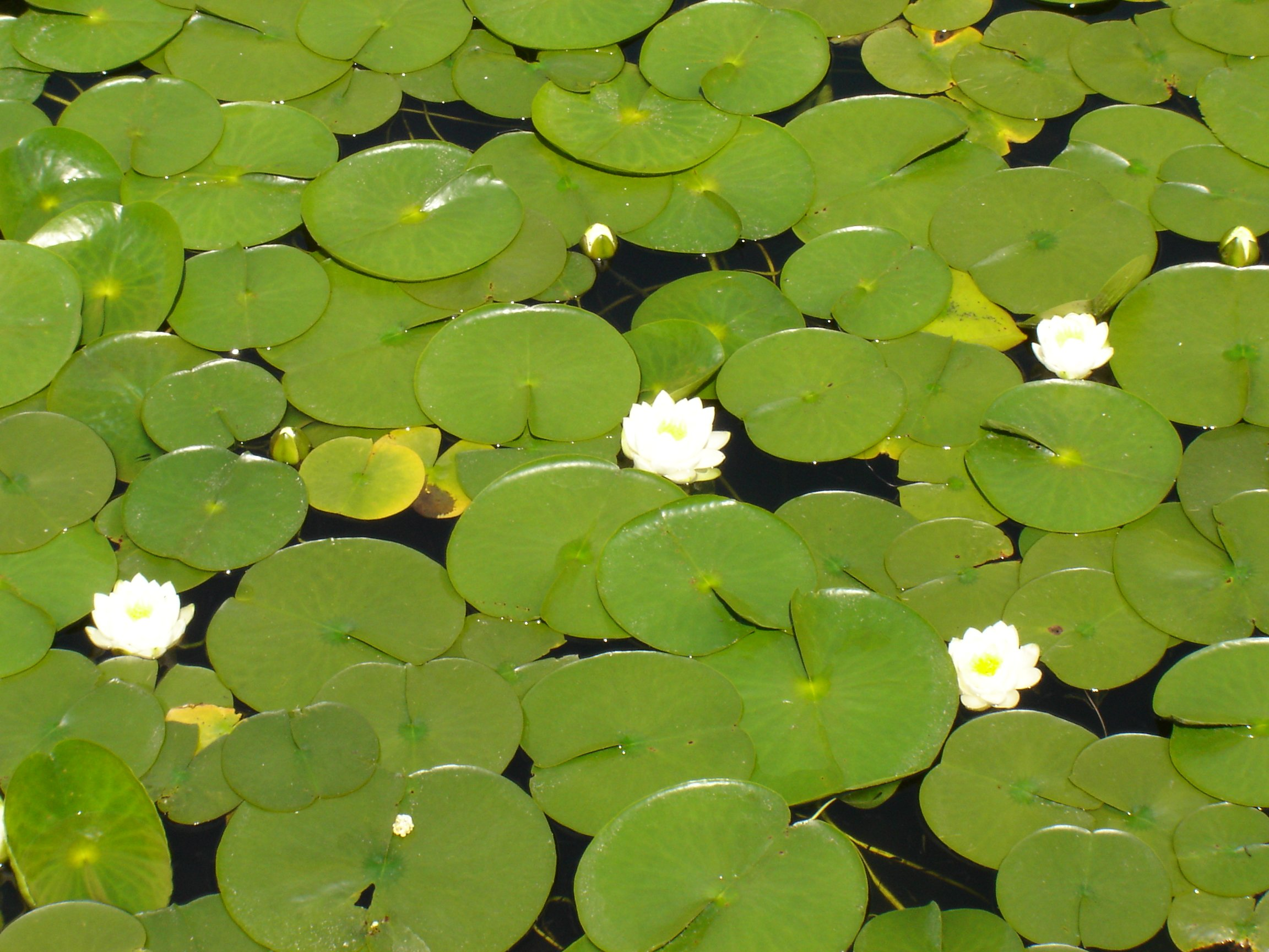 Quotes About Lily Pads...