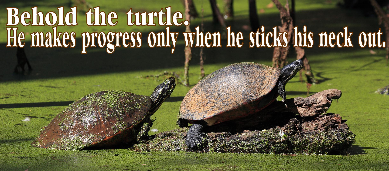 Quotes About Turtles Quotesgram