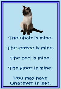 Cat Quotes Siamese. Qu...
