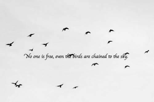 Quotes About Freedom And Birds. QuotesGram Freedom Birds Tumblr