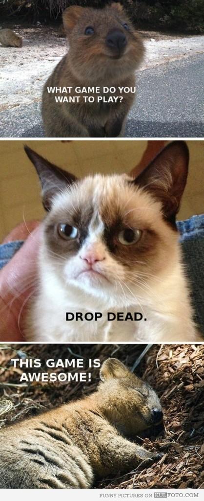 Grumpy Cat Quotes. QuotesGram