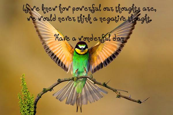Quotes About Love And Birds Quotesgram: Beautiful Bird Quotes. QuotesGram