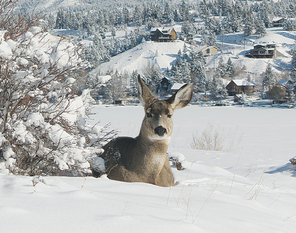 Winter Deer And Quotes. QuotesGram