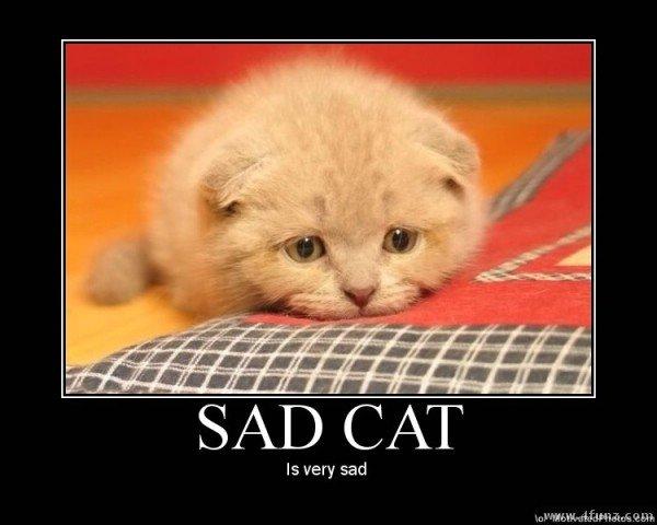 1019709073-sad_20cat_c89d66_3490245.jpg