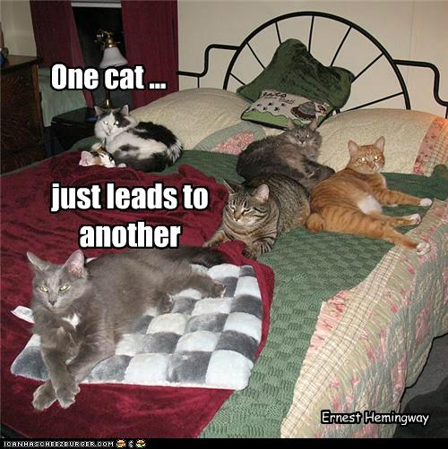 Funny Cat Sayings Quotes: Awesome Cat Quotes. QuotesGram