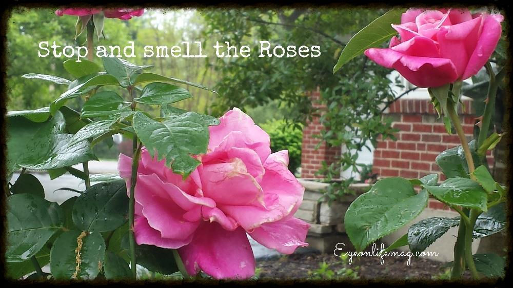 Smell The Roses Quotes. QuotesGram