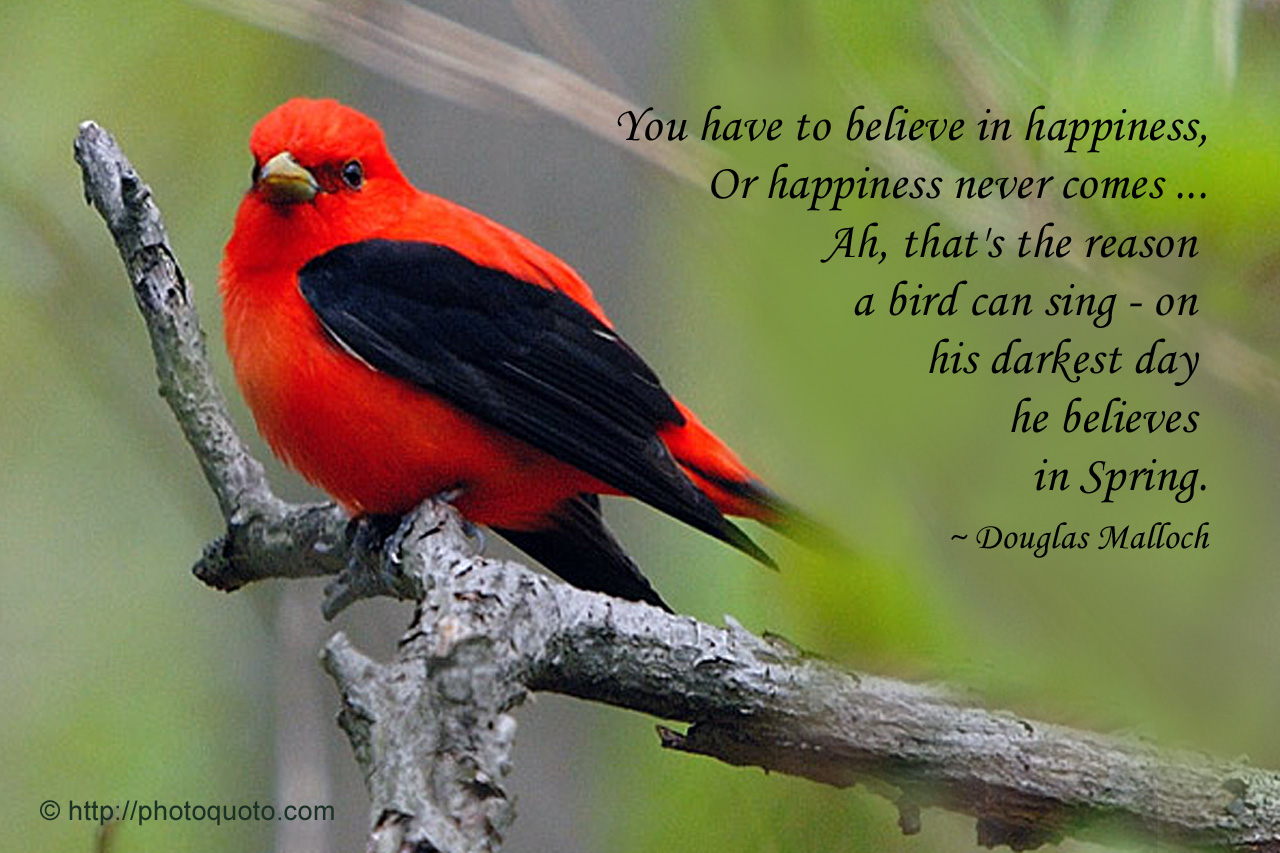 Quotes About Love And Birds Quotesgram: Quotes About Birds In Spring. QuotesGram