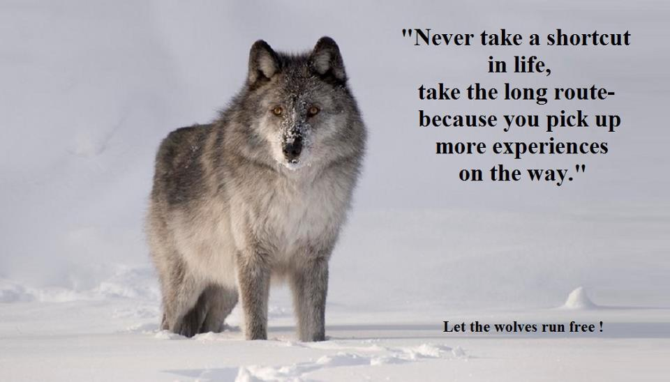 Wolf Poems And Quotes. QuotesGram