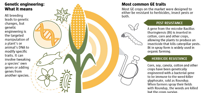 genetically modified food benefit both farmers