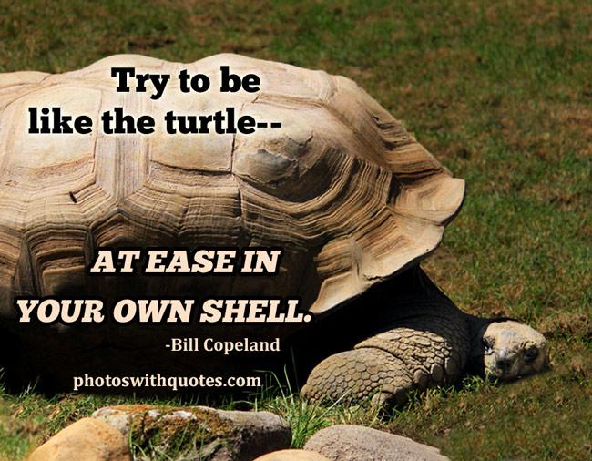 turtleman quotes
