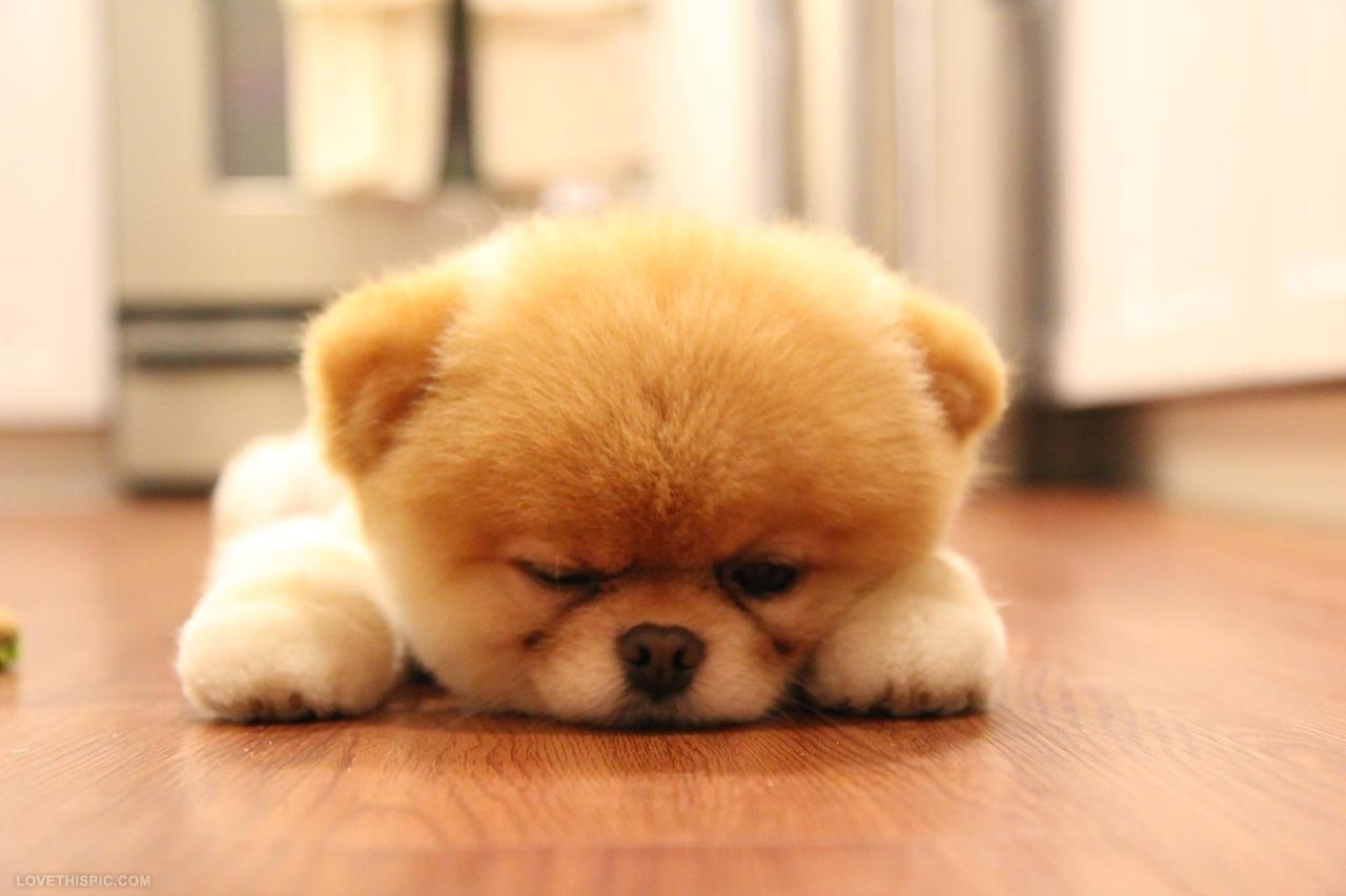 Fluffy Dog Quotes Quotesgram