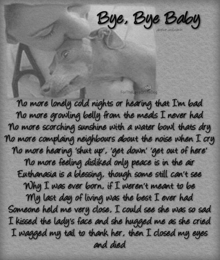 Sad Suicide Quotes Quotesgram: Depressing Quotes About Animals. QuotesGram
