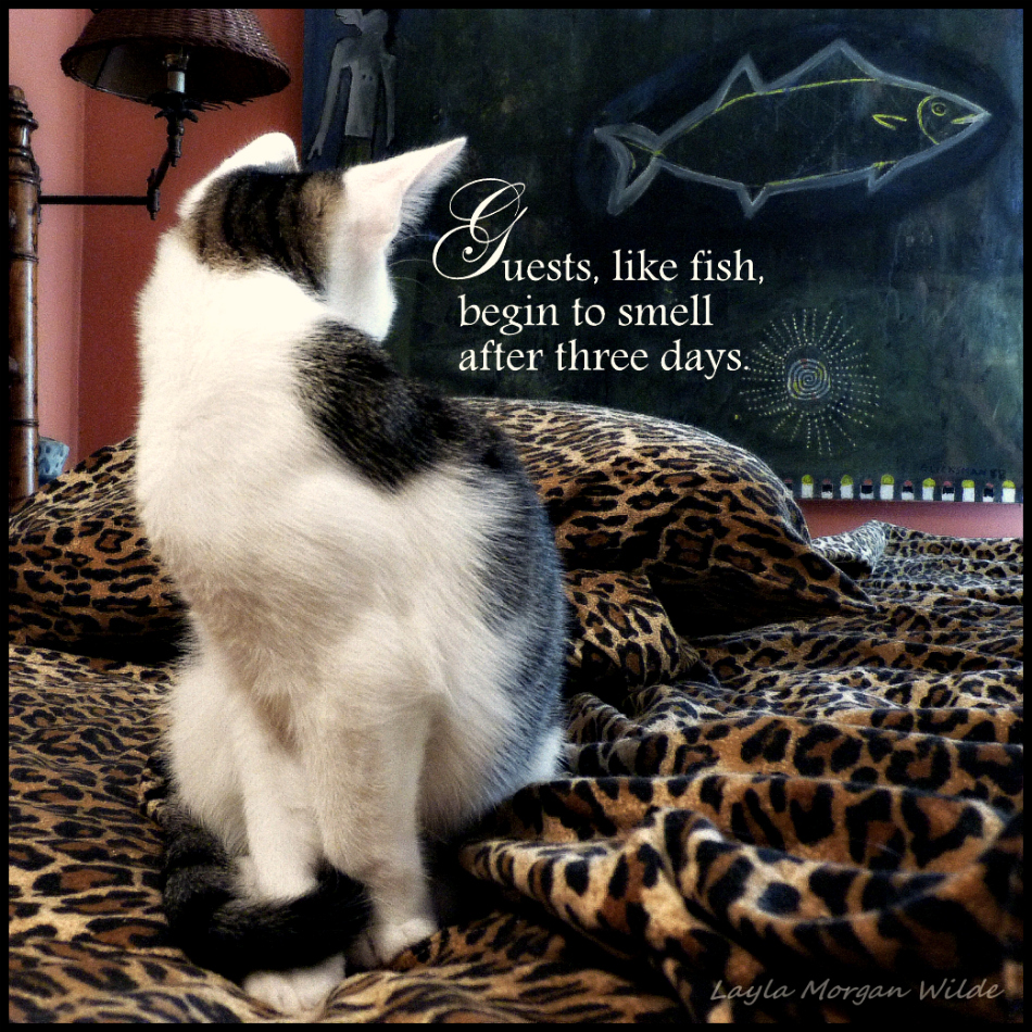 Friendship Quotes Cats: Kitten Quotes. QuotesGram