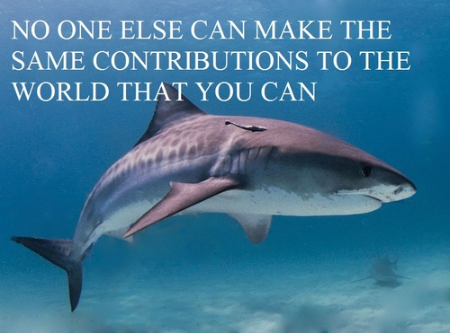 Funny Quotes About Sharks Quotesgram