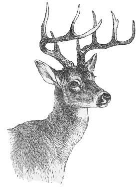 Whitetail Buck Funny Quotes Cartoon. QuotesGram
