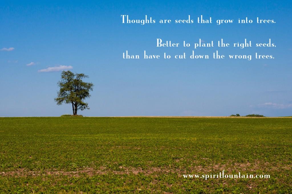 inspirational quotes seeds quotesgram