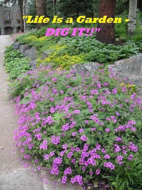 Garden Flower Quotes Quotesgram
