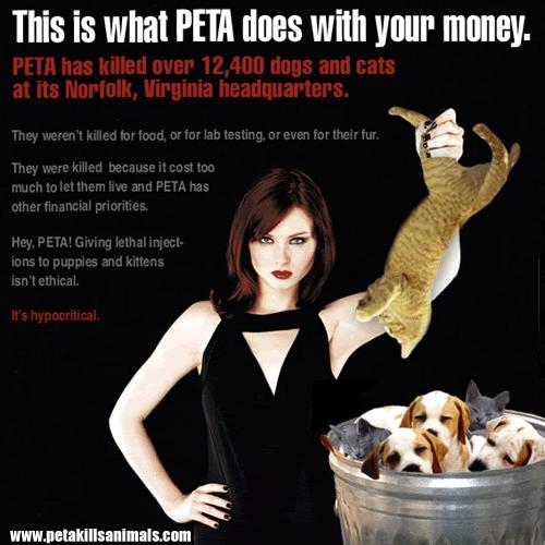 animal rights analysis about peta activist essay Check out our top free essays on peta to help you write your own essay to test there products for years but they have finally decided to stop doing that since they have been pressured by animal rights activist and peta analytics depends on analysis of sufficient volumes of high.