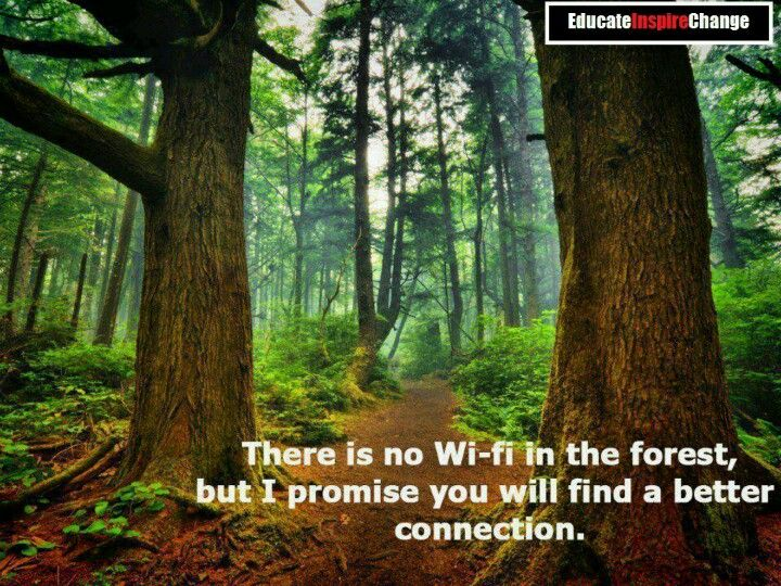 Wise Quotes About The Forest. QuotesGram