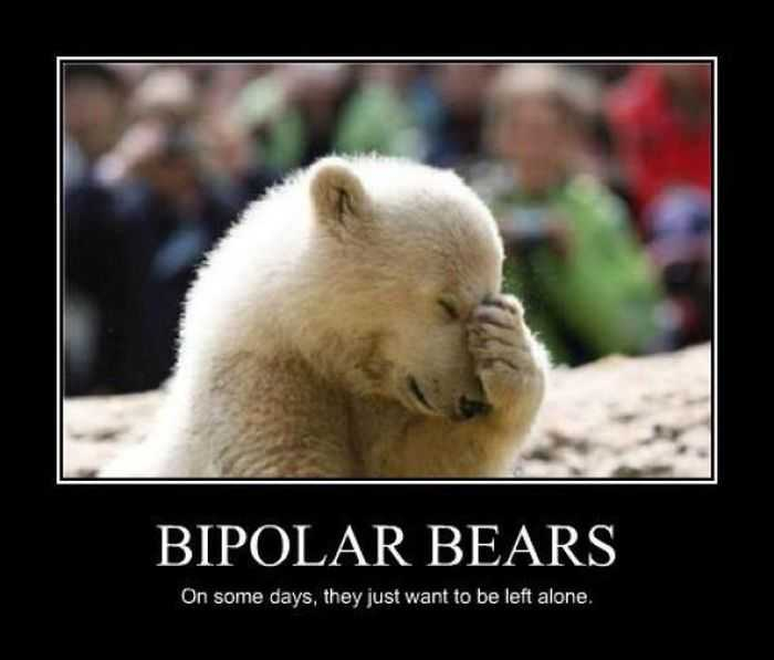 Top 35 Funniest Quotes And Funny Photos: Polar Bear Funny Quotes. QuotesGram