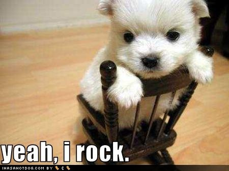 Cute Dog Funny Quotes....