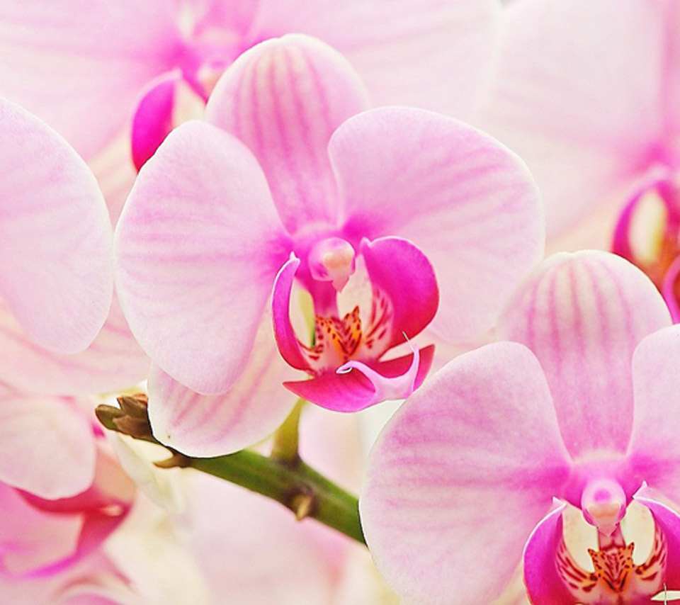 Orchid Flowers Wallpaper Quotes. QuotesGram