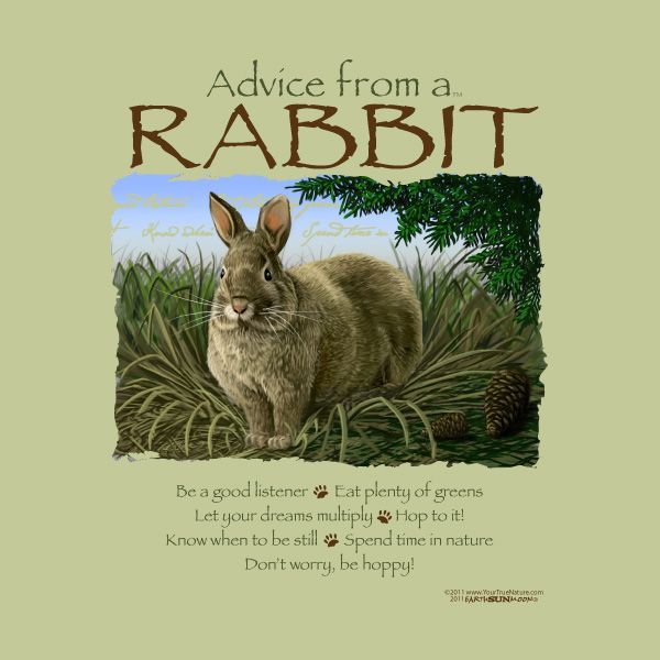 Rabbit Quotes And Sayings. QuotesGram