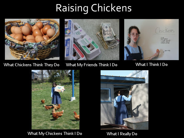 Famous Quotes About Chickens: Quotes About Raising Chickens. QuotesGram