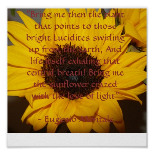 Pictures And Inspiration: Inspirational Quotes Sunflower. QuotesGram