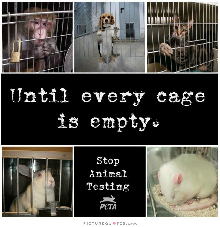 Animal Abuse Quotes By Famous People: Famous Quotes On Animal Testing. QuotesGram