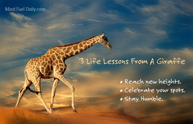 Reach heights quotes