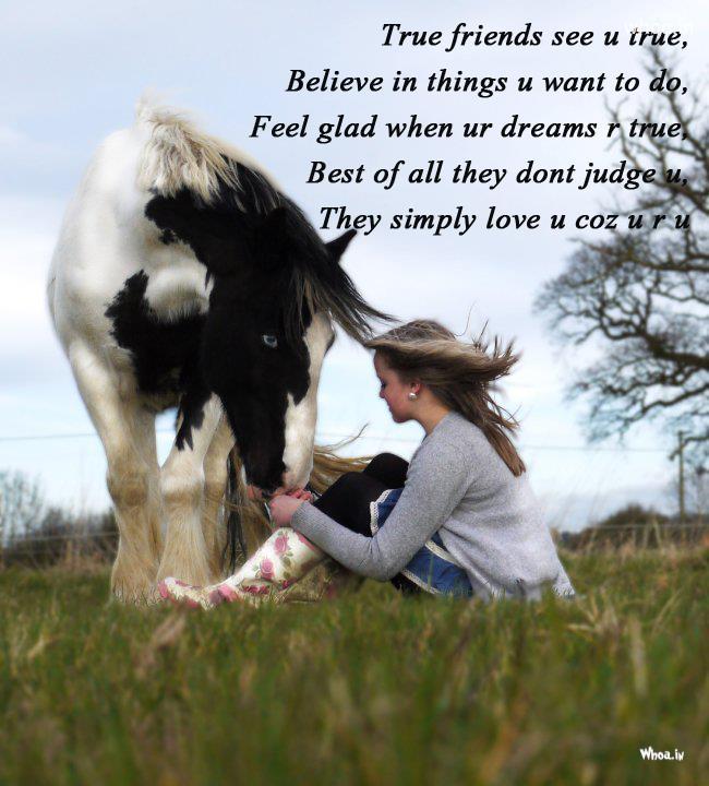 Horse Friendship Quotes Quotesgram