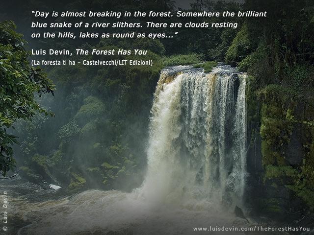 tropical rainforest quotes quotesgram