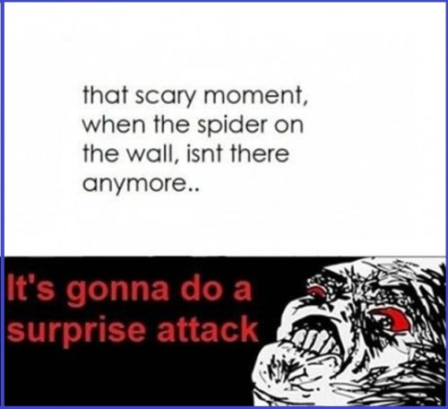 Quotes Of Pictures: Funny Pictures And Quotes About Fear Of Spiders. QuotesGram