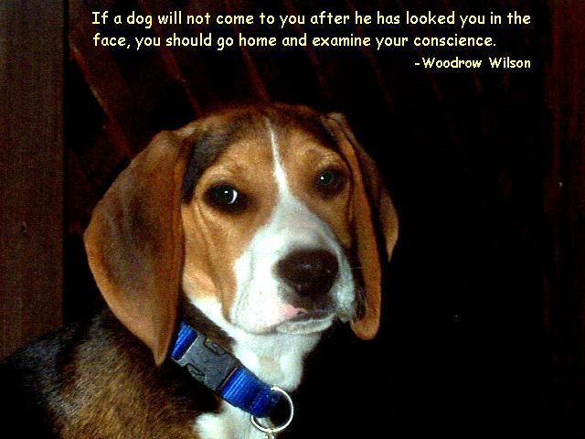 Senior Photos With Dog Quotes. QuotesGram