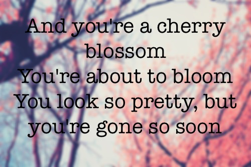 Cherry Blossoms Cute Quotes. QuotesGram